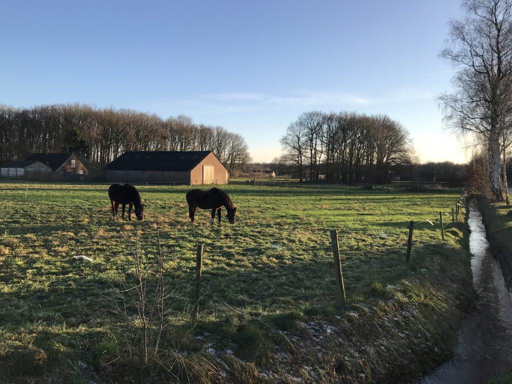 Carstenswijk 7,Elim
